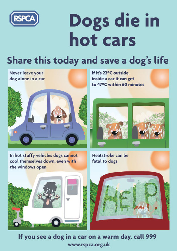 RSPCA Hot Dogs Infographic